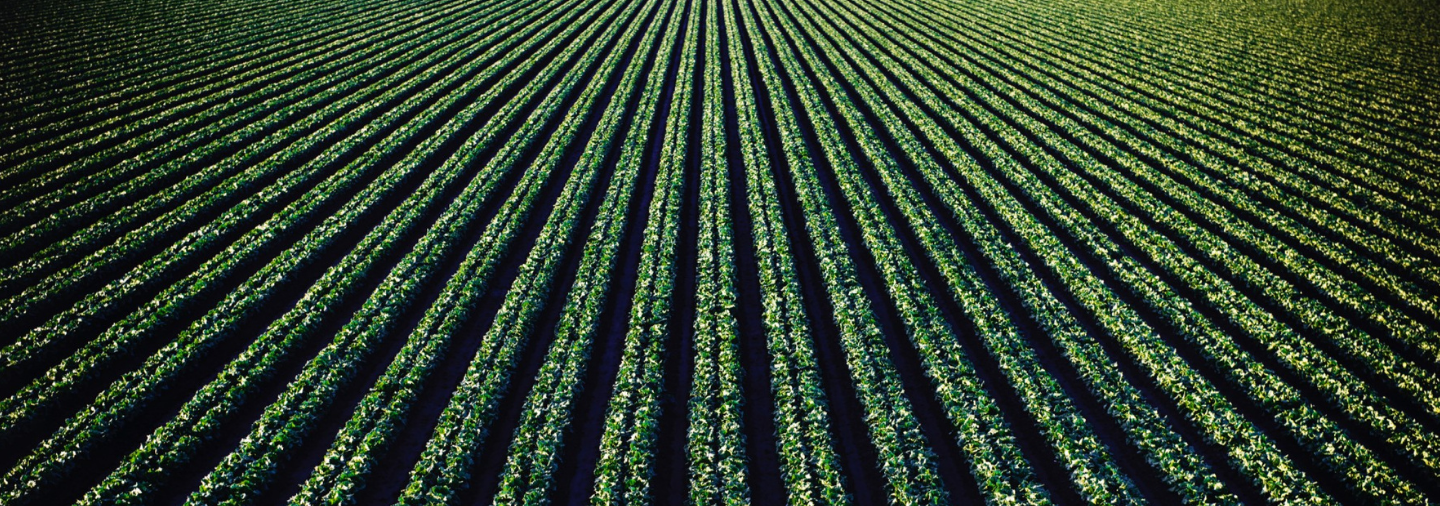 Agrow Analytics – Smart Farming Paired with Green Revolution